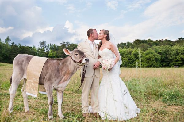 """This Brown Swiss cow named Skye was the flower girl for the wedding of Heath and Amanda."" -- <i>Jamie Weiss</i>"
