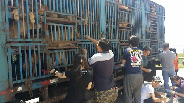 Activists try to feed the animals through the bars as they negotiate for the release of the