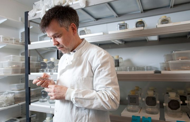 Luke Alphey, co-founder and chief scientist of Oxitec Ltd., examines a petri dish containing insects at the company's headqua