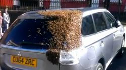 20,000 Bees Would Not Leave This Woman's Car