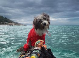 'Sailor Dog' Kayaks Around The Mediterranean With Her Human