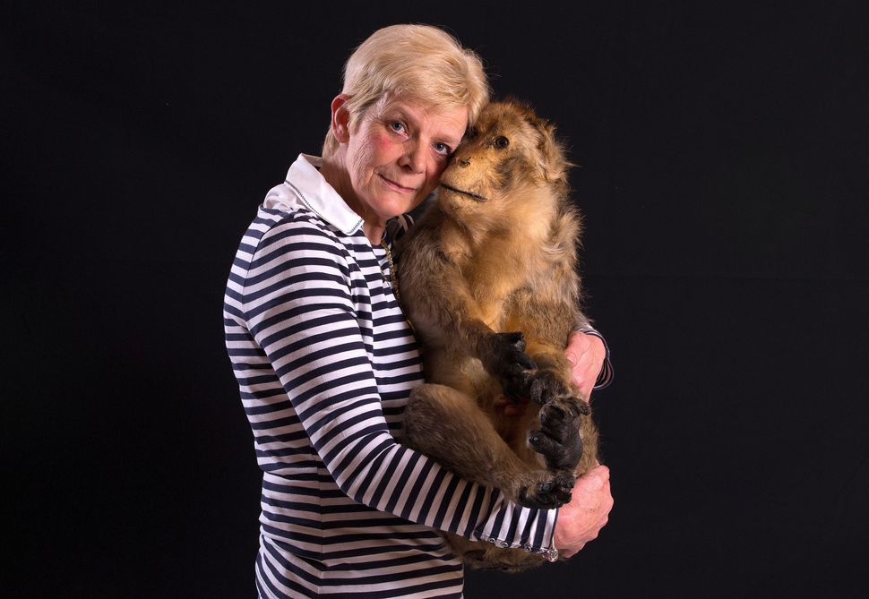 a6d6209c7095 Chantal Bauchez holds her stuffed barbary macaque, Moukys, at her home  in Rebecq
