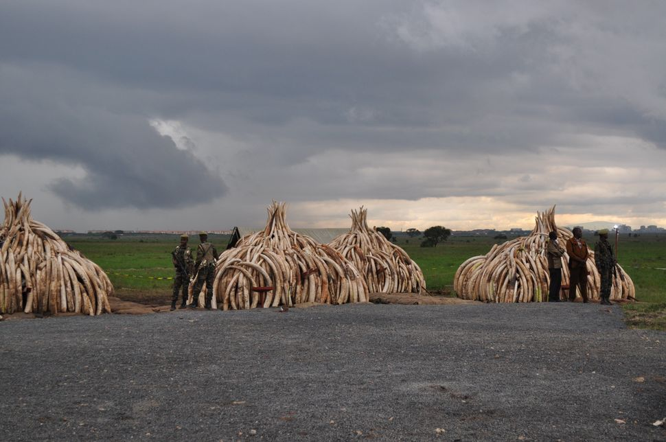 Nairobi National Park, the site of last month's celebrated ivory burn, is threatened by a Chinese-funded railway.