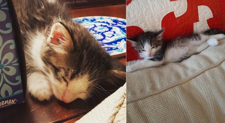 The adorable kitten's adopted family says she has shown no signs yet of wanting to return to the streets. We don't wonder why