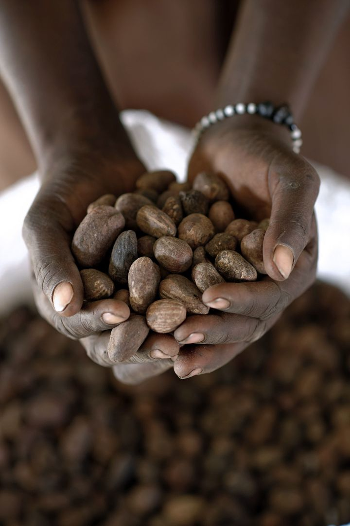 A woman holds shea nuts on a shea butter production line.