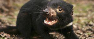 ANIMAL SPECIES ENDANGERED DISEASE ILLNESS SICKNESS