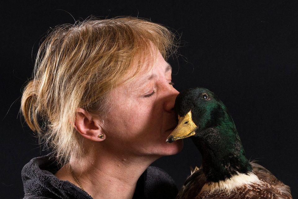 Myriam Waeles kisses her stuffed duck, a mallard named Arthur, at her home in Lennik, Belgium, on April 29, 2016.