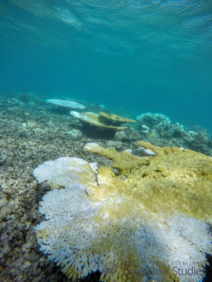 The Great Barrier Reef is experiencing the worst coral bleaching event in recorded history.