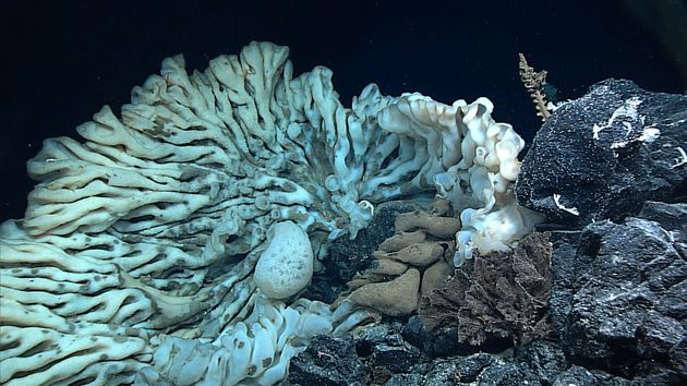 This Minivan-Sized Sea Sponge Is Thought To Be Planet's Largest