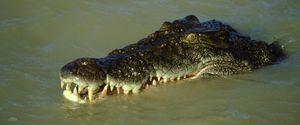 AUSTRALIA CARNIVOROUS CROCODILES DANGEROUS HAZARD