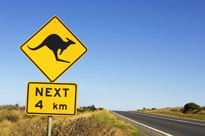 Two women in bicycling Australia were injured after a kangaroo jumped off a nearby ledge and appeared to use them as launchin