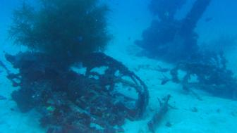Part of the scattered debris crash site of a U.S. Navy WWII TBM-1C Avenger torpedo bomber lying on the ocean floor since 1944 off the Pacific Ocean republic of Palau.