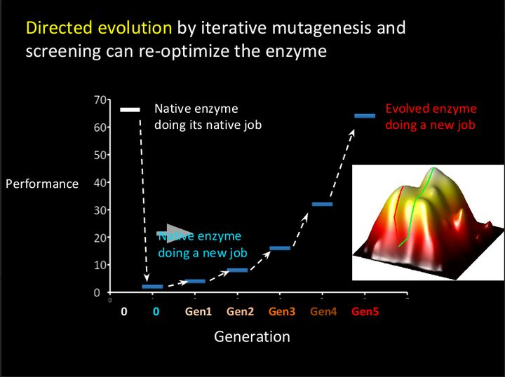 This slide, provided by Arnold, shows the process of directed evolution.
