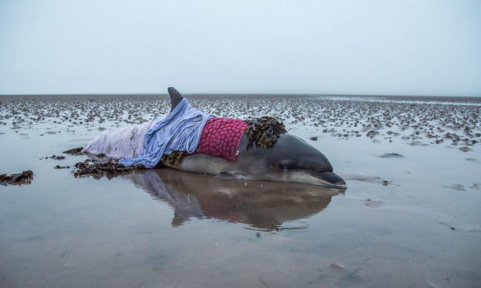 The stranded dolphin Lorraine Culloch found in Nigg, Aberdeen, after her Sat Nav gave her the wrong