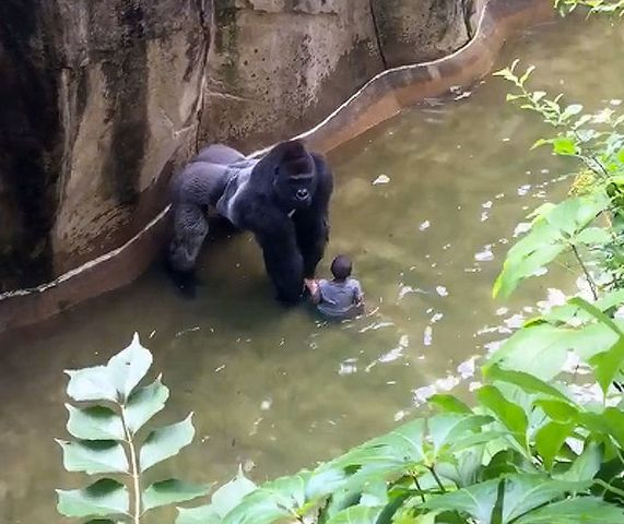 Gorilla Shooting: Family Of Boy 'Thankful' To Zoo For