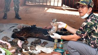 A dead tiger cub is held up by a Thai official after authorities found 40 tiger cub carcasses during a raid on the controversial Tiger Temple, a popular tourist destination which has come under fire in recent years over the welfare of its big cats, in Kanchanaburi province, west of Bangkok, Thailand June 1, 2016. Daily News/via REUTERS. ATTENTION EDITORS - THIS IMAGE WAS PROVIDED BY A THIRD PARTY. EDITORIAL USE ONLY. NO RESALES. NO ARCHIVE. THAILAND OUT.