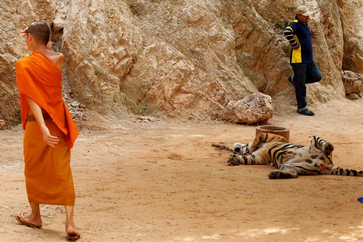 Three Buddhist monks are facing charges in Thailand for attempting to smuggle products made from tiger parts out of a pu