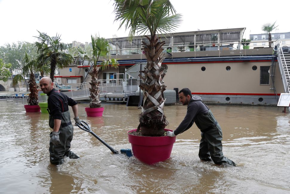 Workers drag palm trees through the floods.