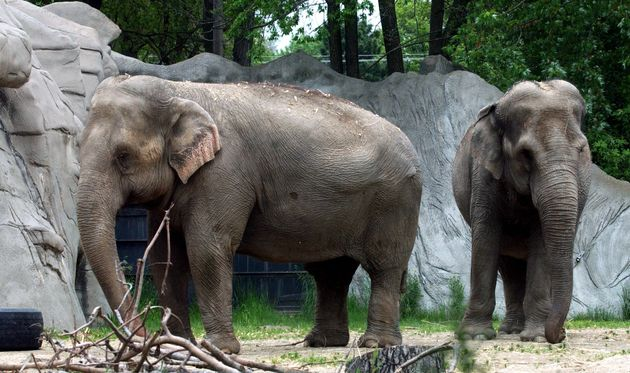 Asian elephantsWanda (L) and Winky were moved from Detroit Zoo in 2005 to an animal sanctuary due...
