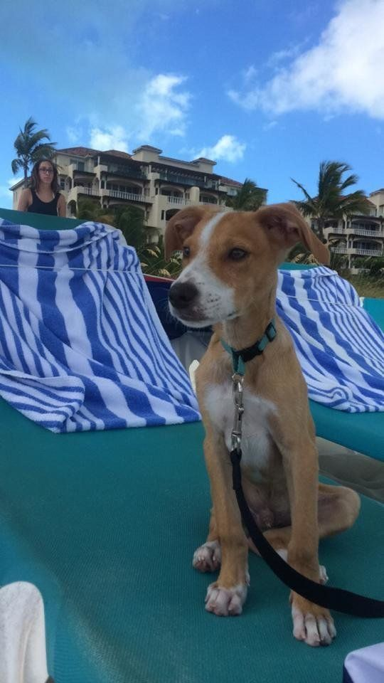 Make room for us on your beach chair, pup.