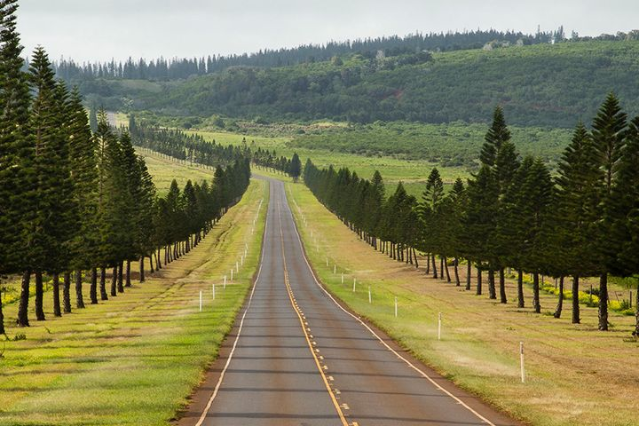 The road between Lanai City and the Four Seasons beach resort and Hulopo'e Bay.