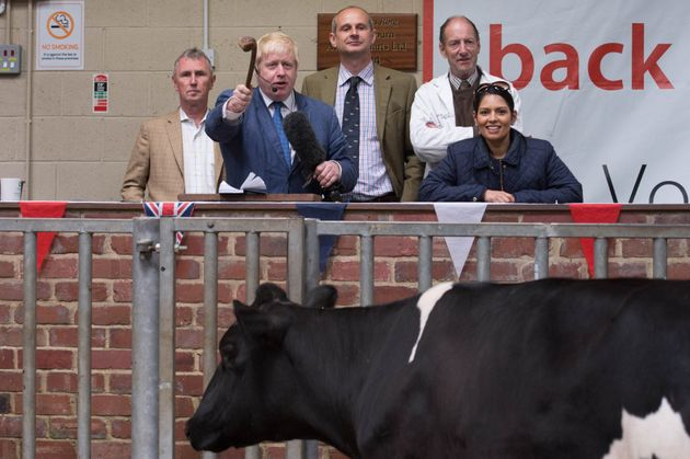 Milking it: Boris Johnson auctions a cow during a visit to a cattle auction in Clitheroe in
