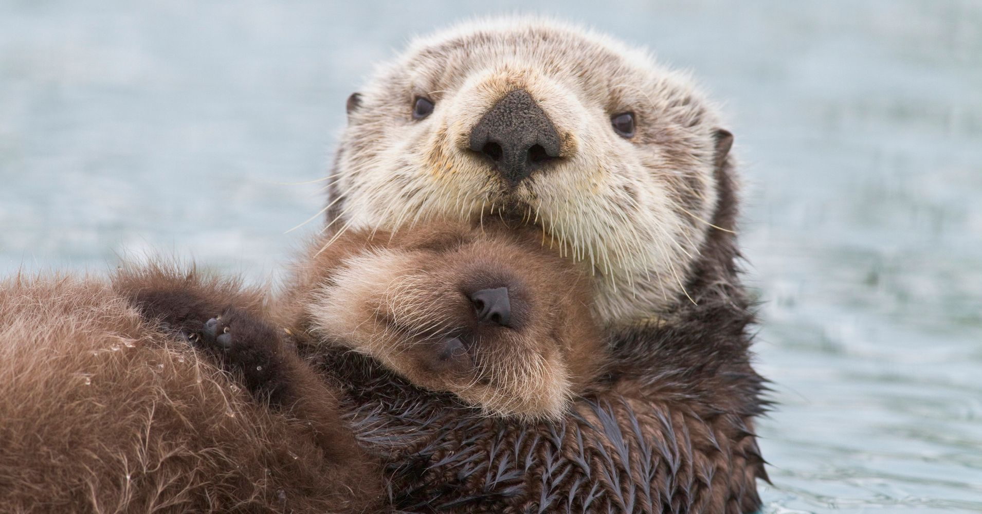 watch heroic rescuers reunite crying otter pup with mom huffpost