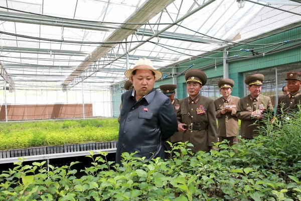 North Korean leader Kim Jong Un gives field guidance at a new tree nursery run by the military in May of 2015.