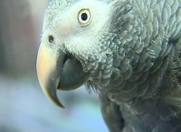 Parents Of Murder Victim Believe His Parrot Witnessed Crime