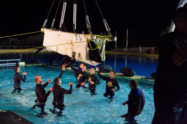 Morgan is carried by crane into a pool at Loro Parque amusement