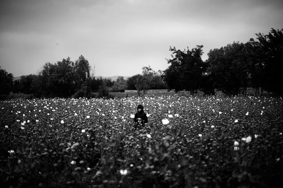 """A girl stands in the middle of a poppy field as Marines pass by on patrol. <i>From the story """"<a href=""""http://www.npr.org/sec"""