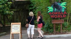No Charges Filed Against Mother Of Boy Who Fell Into Gorilla