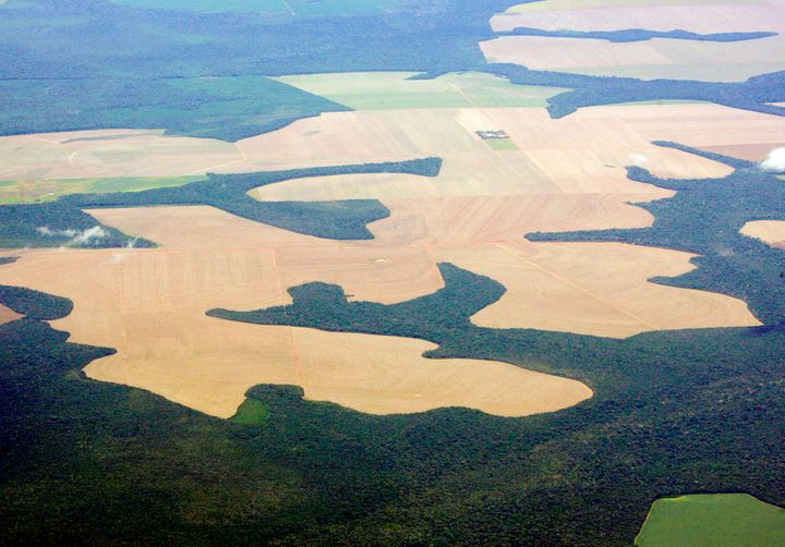 Virgin Amazon rain forest surrounds patches of deforested land prepared for the planting of soybeans.