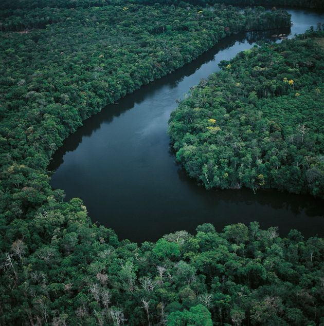 Aerial view of Amazon rainforest in Amazonas State,