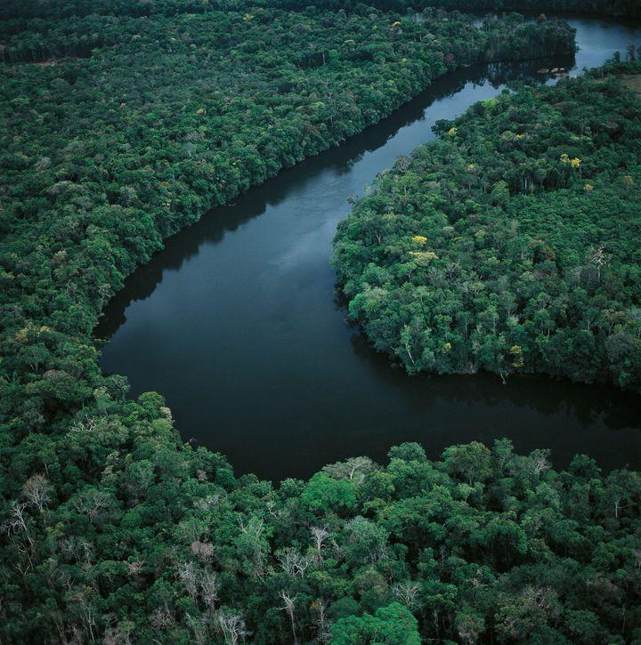 Aerial view of Amazon rainforest in Amazonas State, Venezuela,