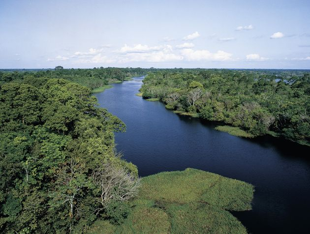 Tributary of the Amazon