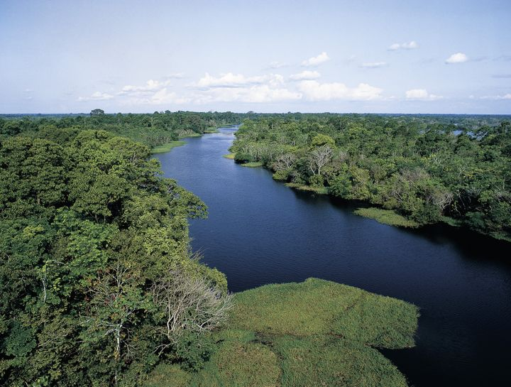 Tributary of the Amazon River.