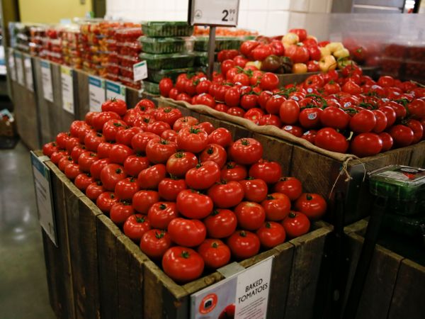 Each brilliant red tomato looks just like the next.