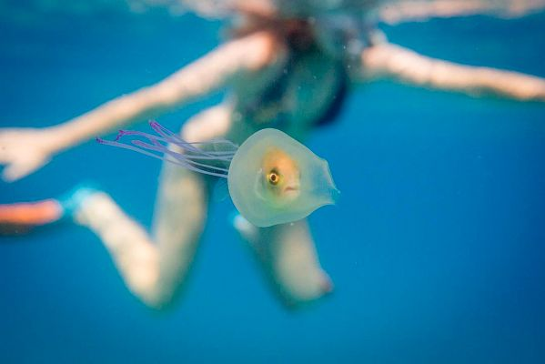 You've Probably Never Seen A Fish INSIDE A Jellyfish