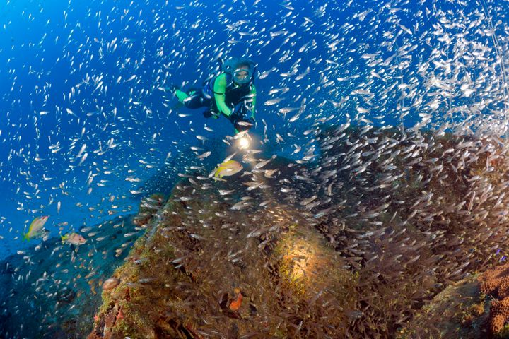 A diver swimsnear Bikini Atoll.