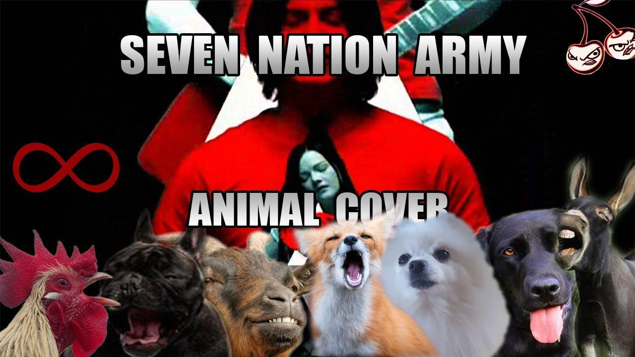 Animals Sing 'Seven Nation Army' By The White