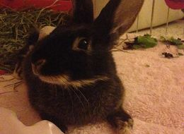 Gentle Bunny Attacked By Teen Girls Has A Lot To Teach Human Beings