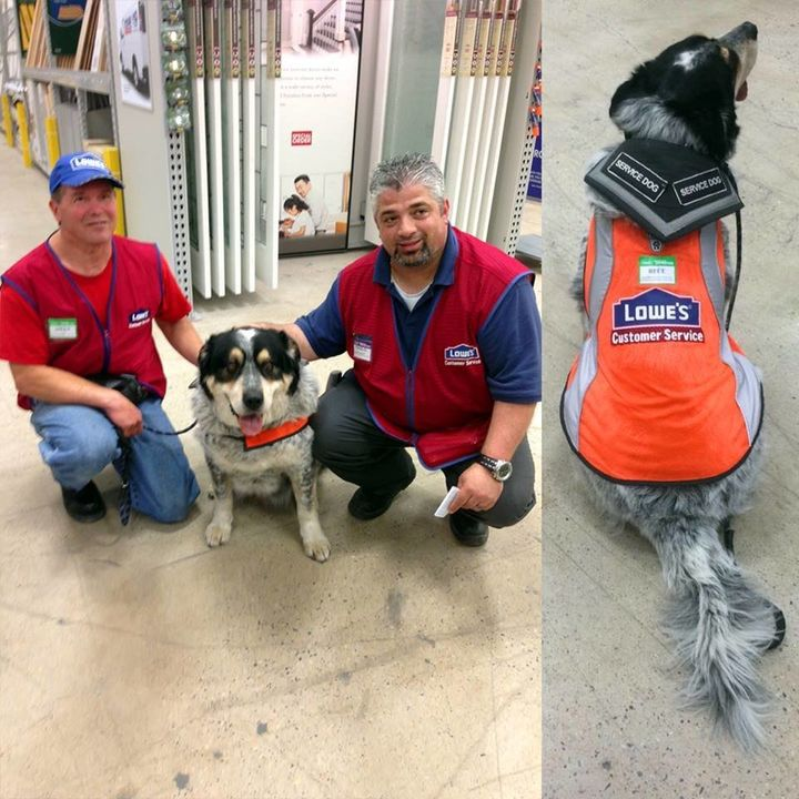Introducing two of Lowe's latest hires: Blue the service dog and his owner, Owen.