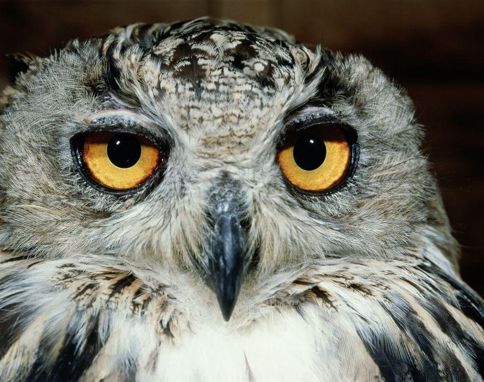 Is That Viral 'Owl Hug' Really A Hug? | The Huffington Post