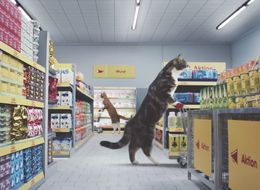 German Supermarket's New Advert Features Cats From Classic Viral Videos Doing Their Shopping