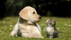 Owning Your First Pet Might Not Be As Expensive As You'd