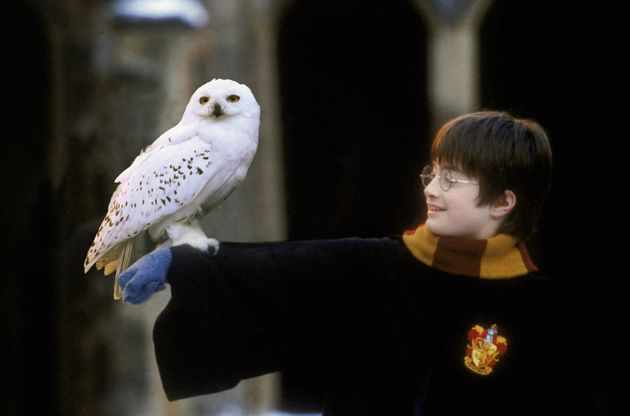 Harry's owl Hedwig was a loyal