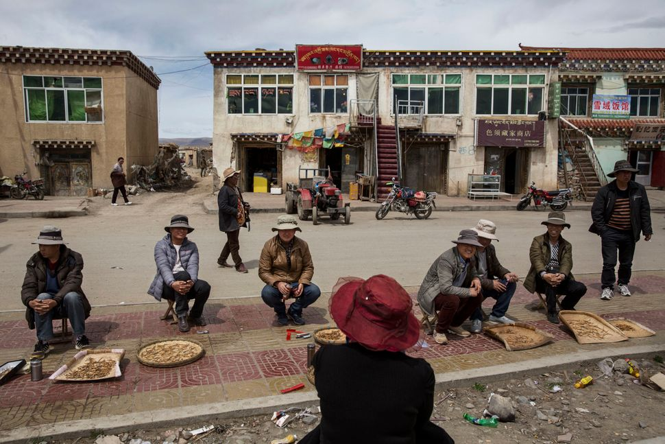 Chinese and Tibetan nomads buy and sell cordycep fungus at a market in Sershulon May 20, 2016.