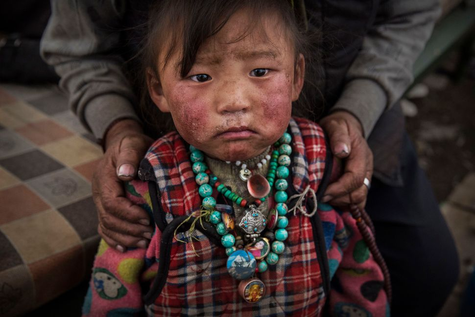 inside the dying days of tibet s caterpillar fungus gold rush