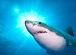 Here's What's Really Frightening About Sharks